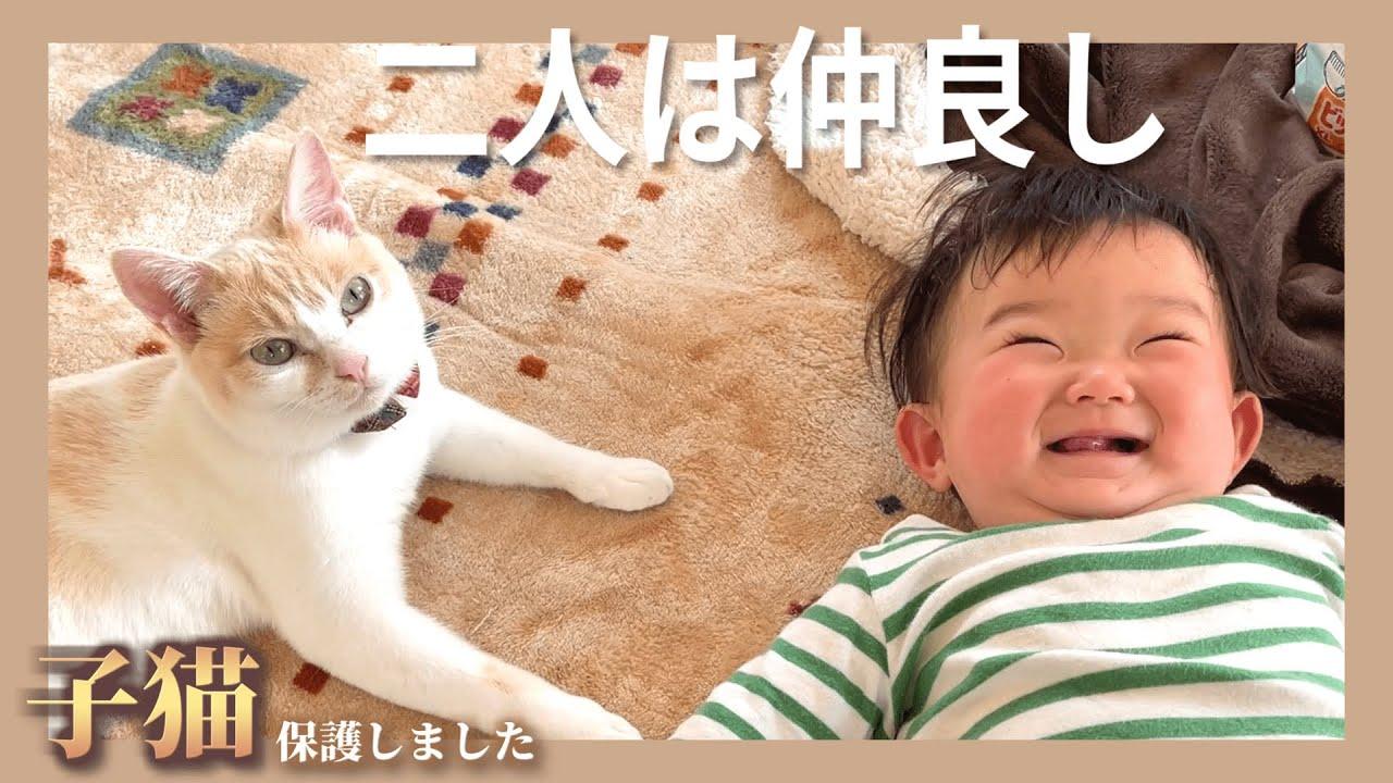 【感動】赤ちゃんが好き過ぎてどつかれても怒らない猫