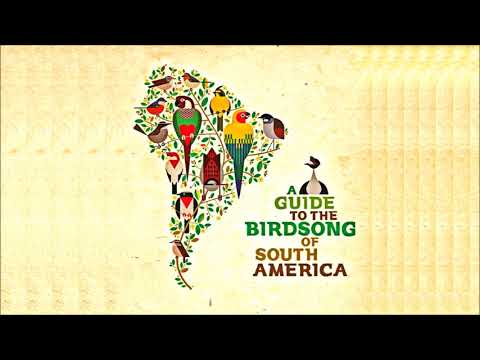 "V/A • ""A Guide to the Birdsong of South America"" LP (2015)"