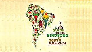 """V/A • """"A Guide to the Birdsong of South America"""" LP (Rhythm & Roots, 2015)"""