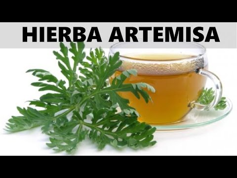 Propiedades Curativas de la hierba artemisa