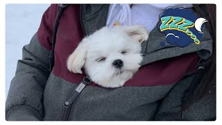 SLEEPING MUSIC FOR PUPPIES HELP YOUR DOG RELAX ❤CUTE