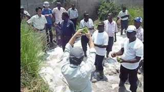 すぐにできる水田稲作in アフリカ: Paddy Rice Training in Zambia, Africa