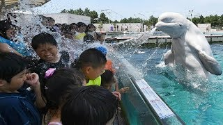 Funny Beluga Whale Troll Baby And Kids in Aquarium  Funny Babies and Pets