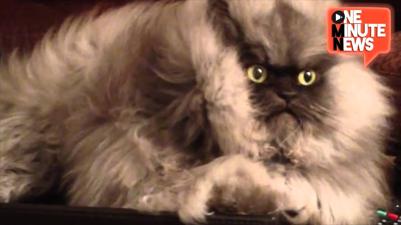 Youtube Grumpy Cat Meow