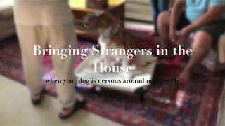 Bringing Visitors in the home with a fear aggressive dog