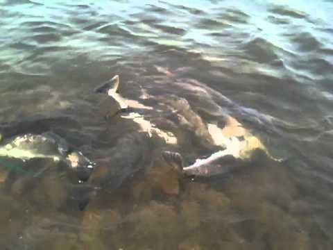 East matagorda bay youtube for East bay fishing report