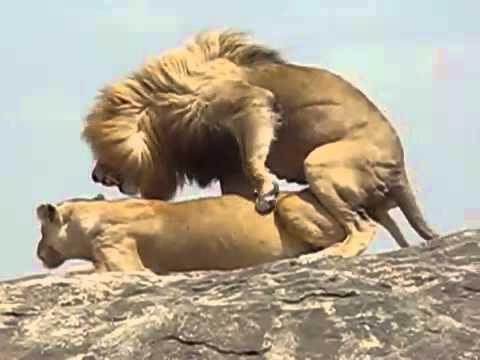 Мужчина Лев в сексе