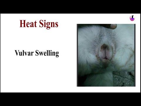 Heat Signs in Dogs II dog and vet II hindi thumbnail