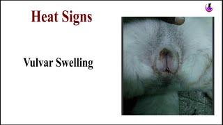 Heat Signs in Dogs II dog and vet II hindi