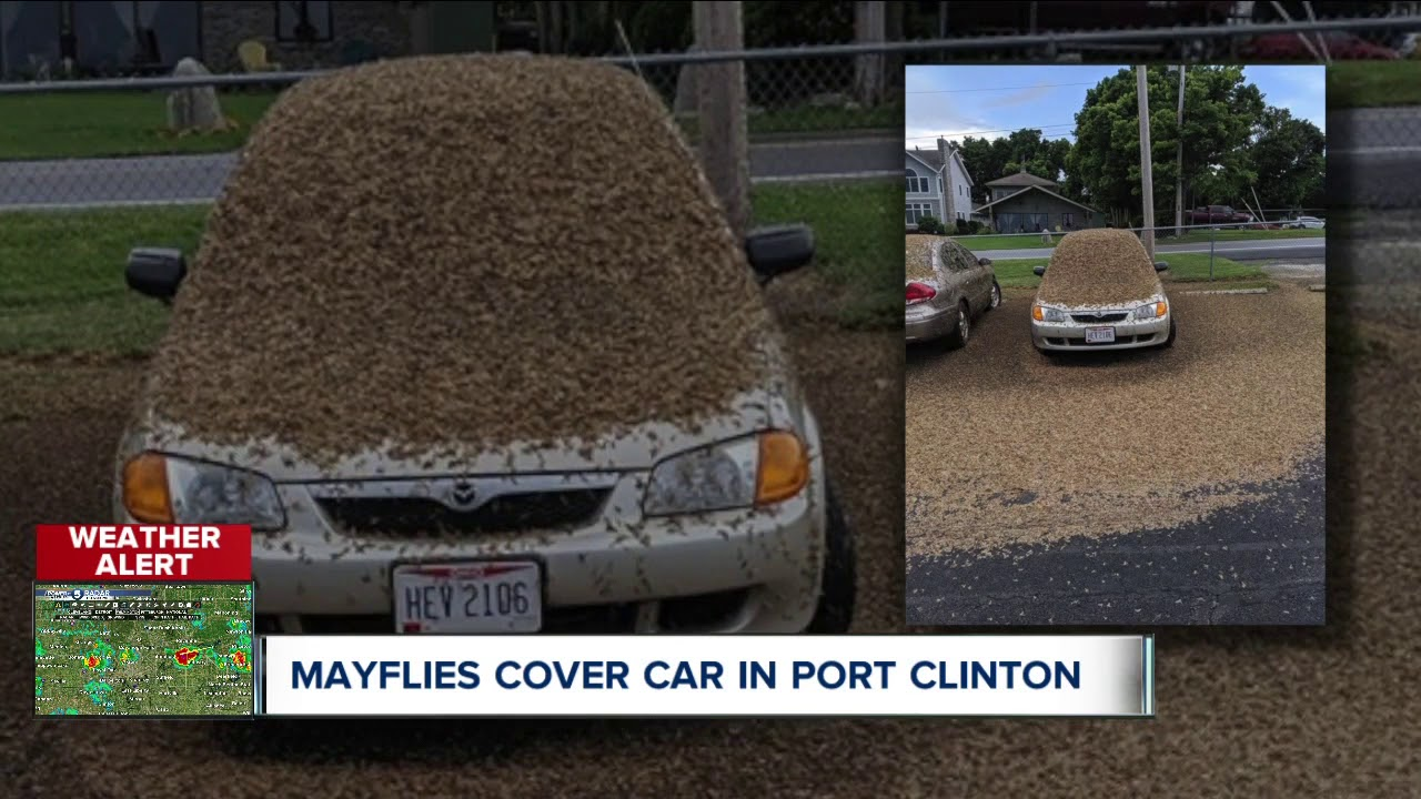 Watch: Mayflies invade northeastern Ohio - UPI com