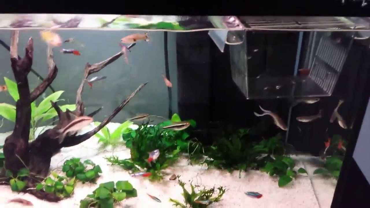 Il mio acquario 60 litri youtube for Allestimento acquario pesci rossi