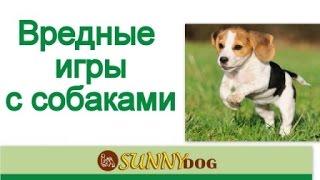 Дрессировка щенка. сверхсоциализация или вредные игры  с собаками