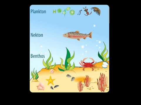 Marine life and Deposits