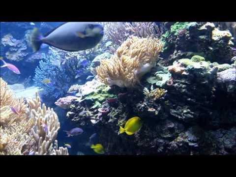Henry Doorly Zoo Aquarium