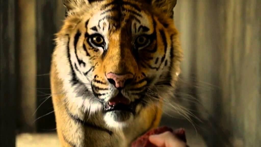 Vita di pi clip the tiger dal 20 dicembre al cinema for Life of pi characters animals