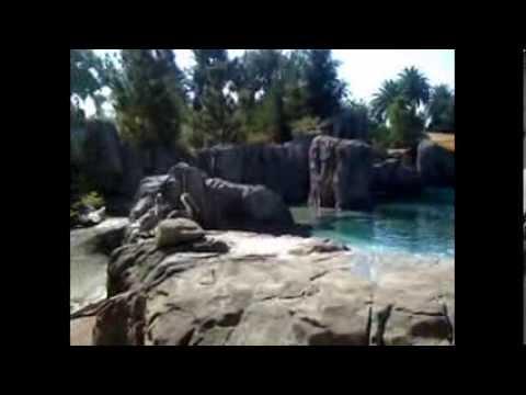 A Trip To The Fresno Chaffee Zoo
