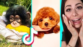 The CUTEST TIKTOK Compilation Ever !