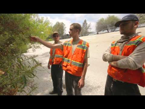 Urban Wildlife Conservation  Los Angeles   Restoration + Recreation HD