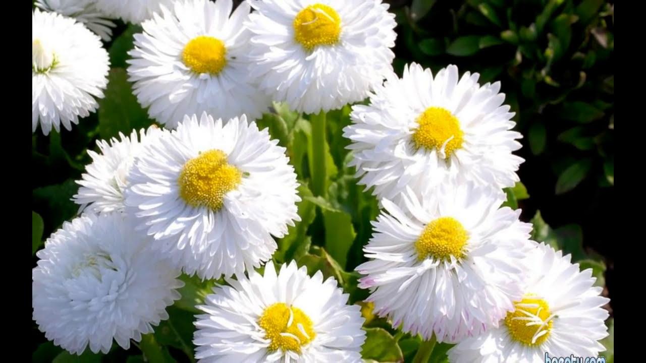 انواع الزهور