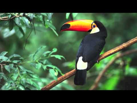 Tropical Rainforest Biome - YouTube