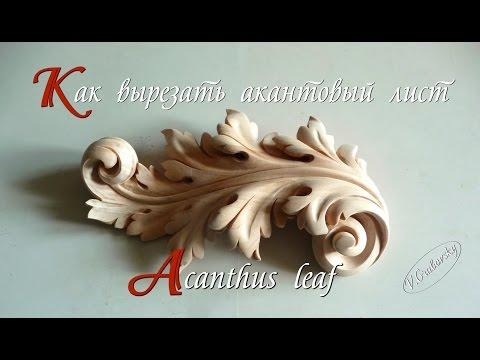Acanthus leaf .