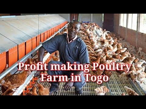 PROFIT Making Poultry Farm in Togo