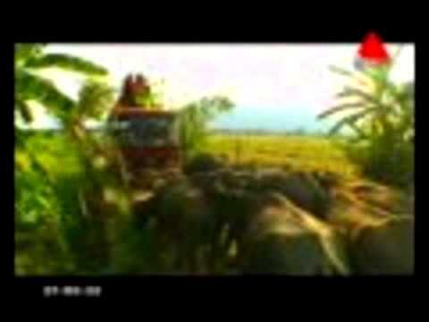 FULL EPISODE Sirasa Super Star Season 03 Final 12 Kokila Koojana (Part 1) from YouTube · Duration:  9 minutes 26 seconds
