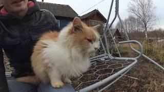 Про кота и кошку из приюта