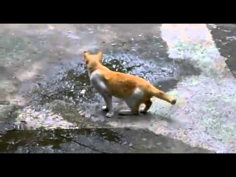 Unflappable Cat Funny