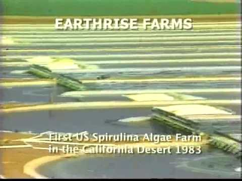 First USA Spirulina Algae Production: Earthrise Farms 1983