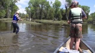 Carp Hunting with Bows and Arrows - Upper Missouri River, Montana