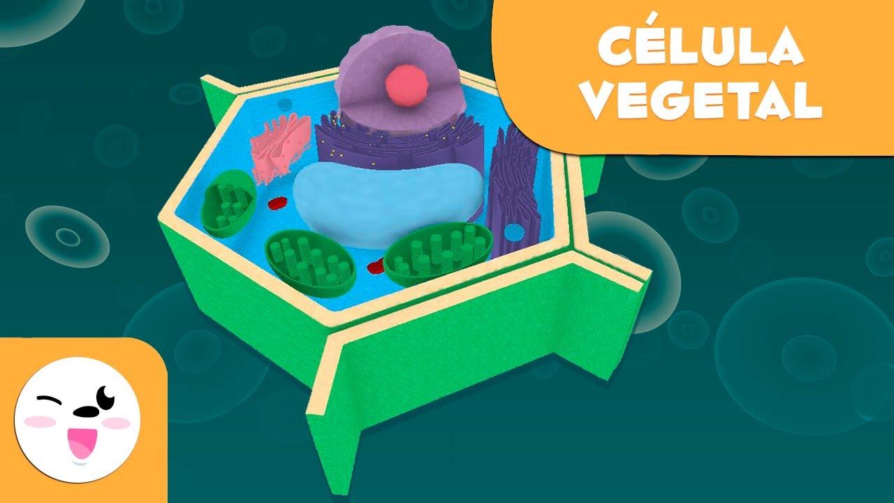 La Célula Vegetal Y Sus Partes Ciencias Naturales Vídeo Educativo Para Niños