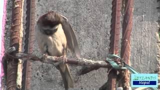 World Sparrow Day.mp4