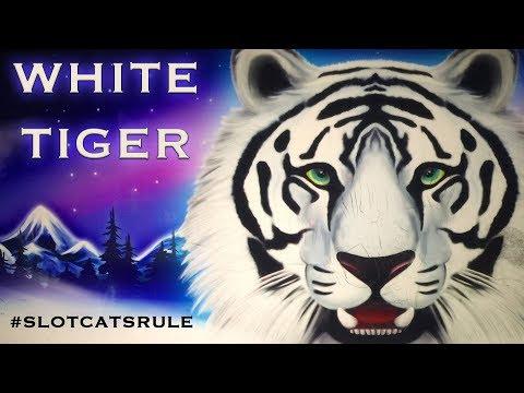 Daji Dali 💰 White Tiger 🐯 Dancing Drums 💃🏻🛢🛢 The Slot Cats 🎰😸😺