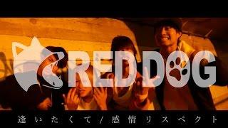 """名古屋発!情熱と愛嬌溢れる4ピースロックバンド""""RED DOG(レッドドッグ)..."""