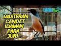 Masteran masteran Cendet Langkamasteran Cendet Idaman Para Juri  Mp3 - Mp4 Download