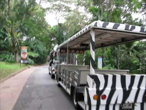 singapore zoo night safari trip by amrapali jayshree. Black Bedroom Furniture Sets. Home Design Ideas