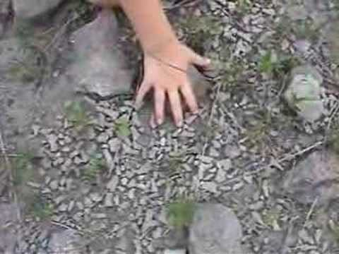 HUNTING FOR SHARKS TEETH- SUCCESS! from YouTube · Duration:  5 minutes 33 seconds