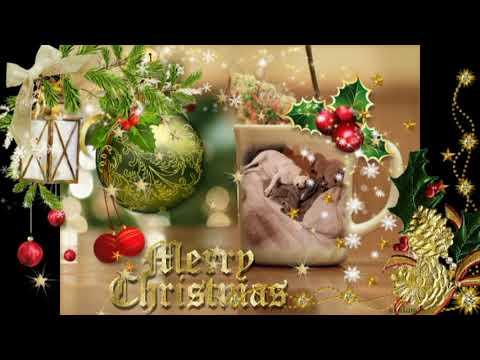 Weihnachtsbilder Und Videos.Ein Schönes Hunde Video Mit Schön Weihnachtsbilder