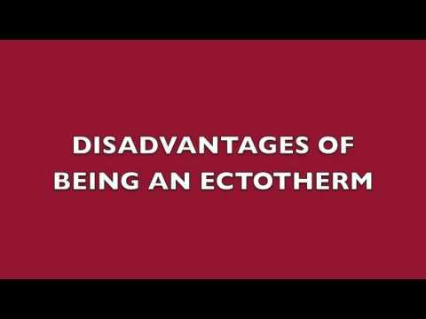 ENDO vs ECTOTHERMS