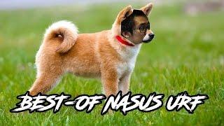 LE DOGE EN URF ! - Condensé d'une vidéo retrouvée dans les fin-fonds de mon PC.
