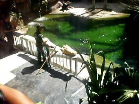 Croc Keeper Talking Bout The Dangers Of Crocs