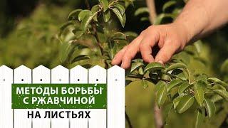 видео Груша: болезни листьев, почему чернеют и опадают