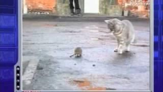 кот vs крыса Сам Себе Режиссер