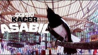 Gambar cover Gopro Hero 4 : Penampilan Kacer Asabil Tampak Jelas!!!!
