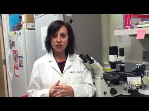 Boosting Regulatory T Cells (Tregs) in Type 1 Diabetes Patients - Diabetes Research Institute