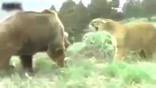 Animal fights Animal attacks. コメントのように忘れて、私のチャンネ...