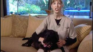 How to Care for a Dog with Degenerative Myelopathy