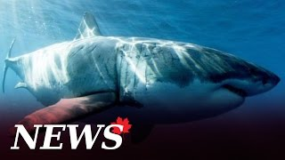 History's biggest shark takes a bite out of Dynamic Earth