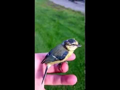 1 vogel in de hand